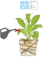 What is the best way to prepare my potted plants for winter?